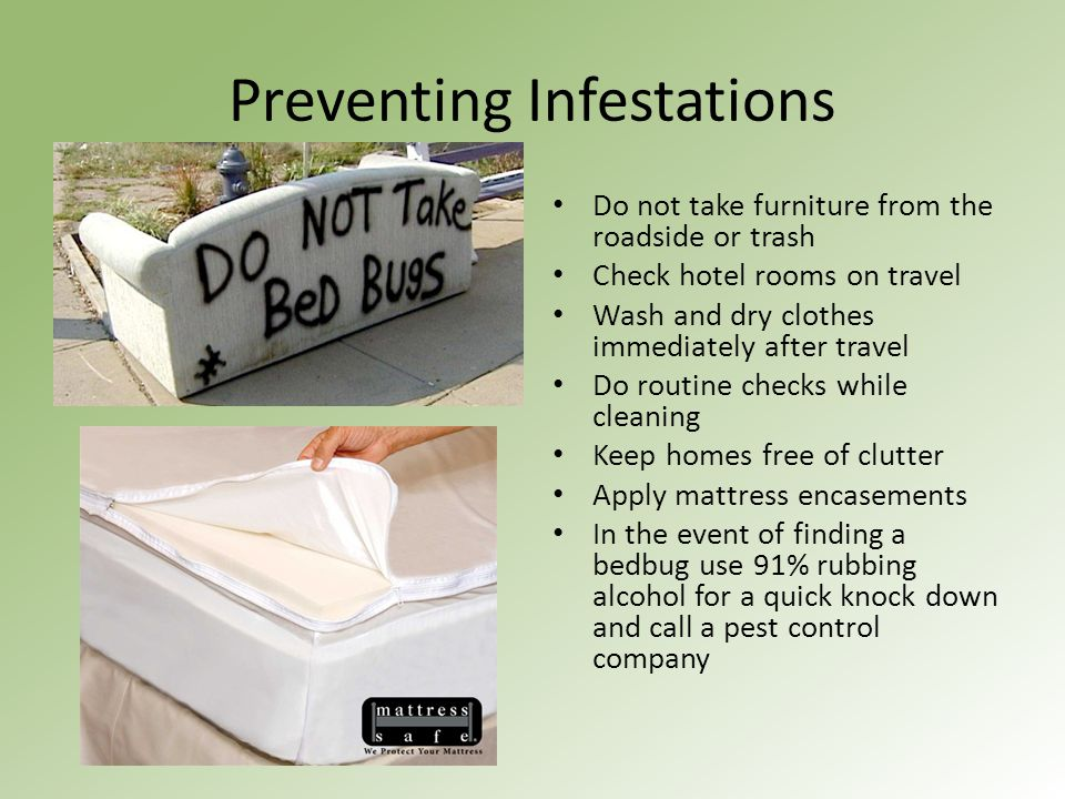 Preventing Infestations Do not take furniture from the roadside or trash Check hotel rooms on travel Wash and dry clothes immediately after travel Do