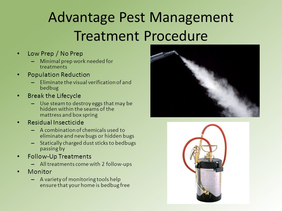 Advantage Pest Management Treatment Procedure Low Prep / No Prep – Minimal prep work needed for treatments Population Reduction – Eliminate the visual
