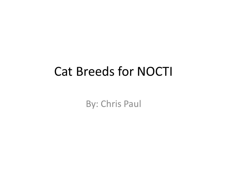 Cat Breeds for NOCTI By: Chris Paul