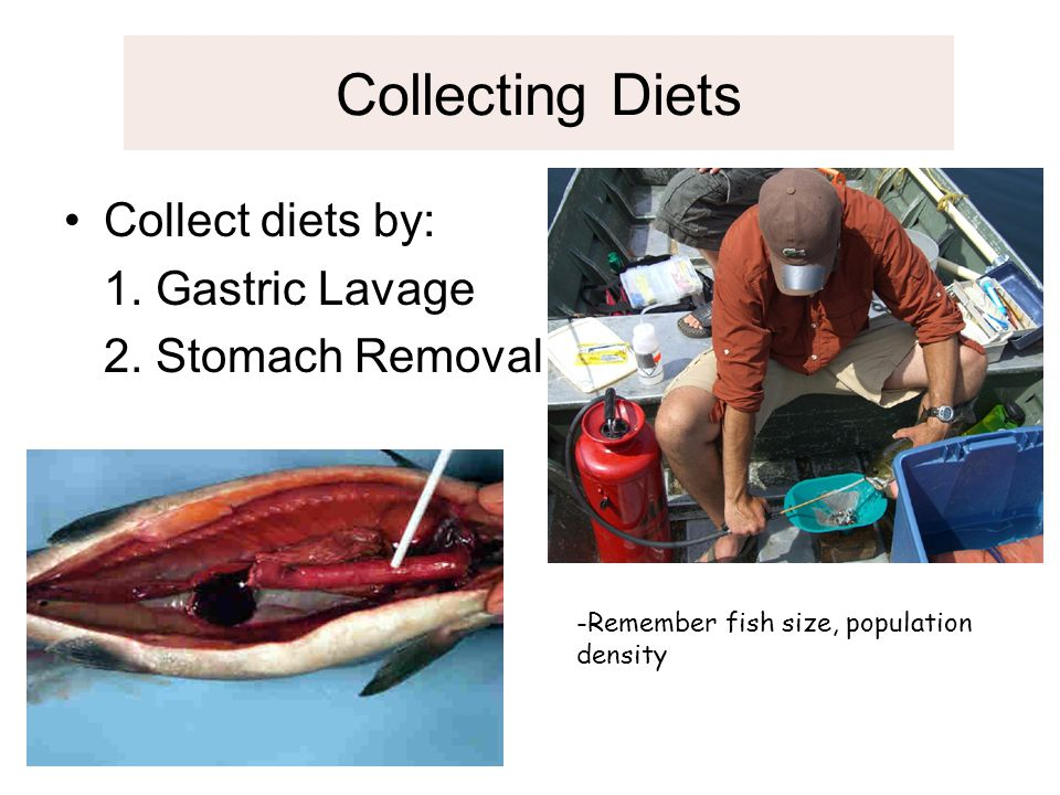 Collecting Diets Collect diets by: 1. Gastric Lavage 2. Stomach Removal -Remember fish size, population density