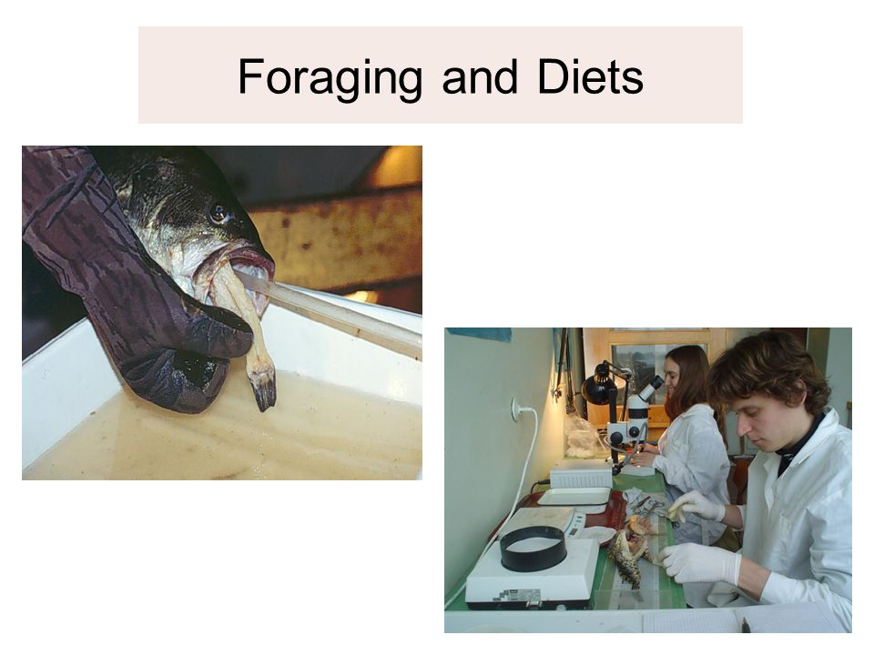Foraging and Diets