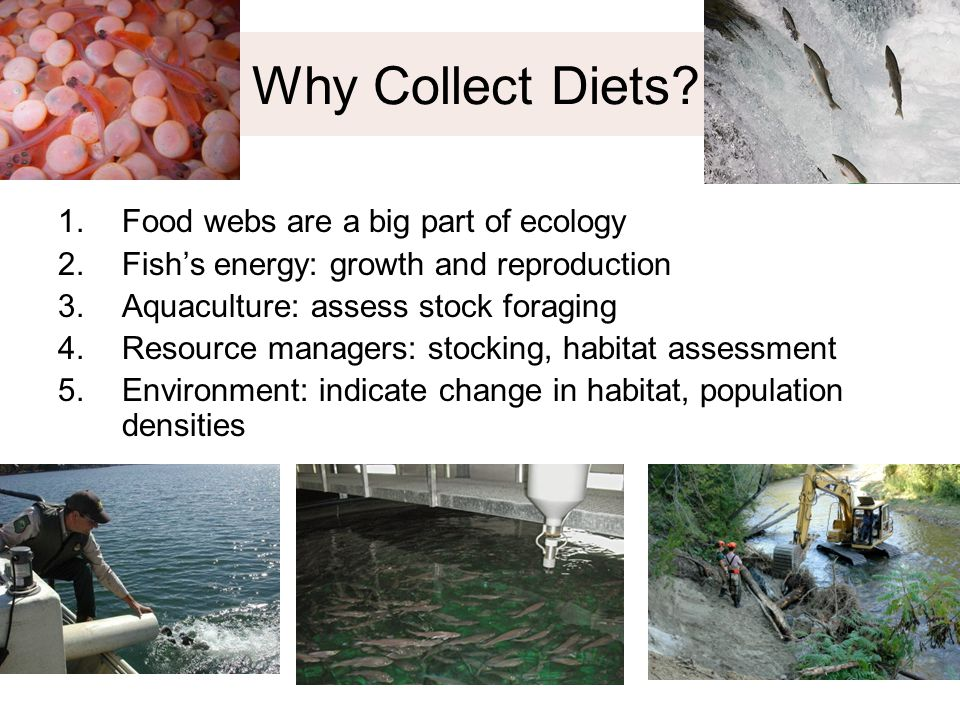 Why Collect Diets? 1.Food webs are a big part of ecology 2.Fish's energy: growth and reproduction 3.Aquaculture: assess stock foraging 4.Resource mana