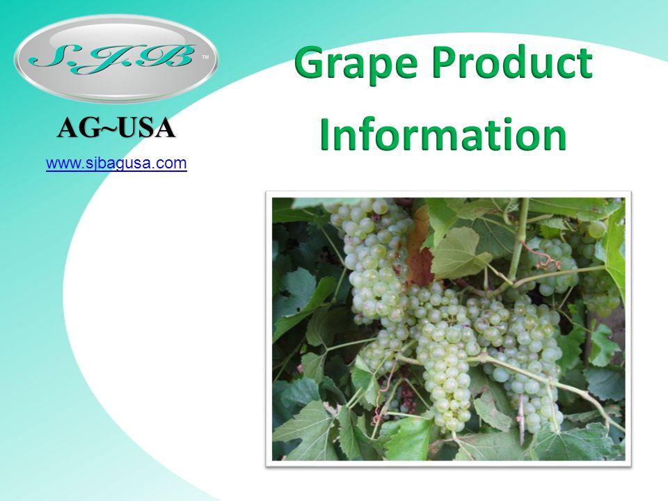 AG~USA www.sjbagusa.com