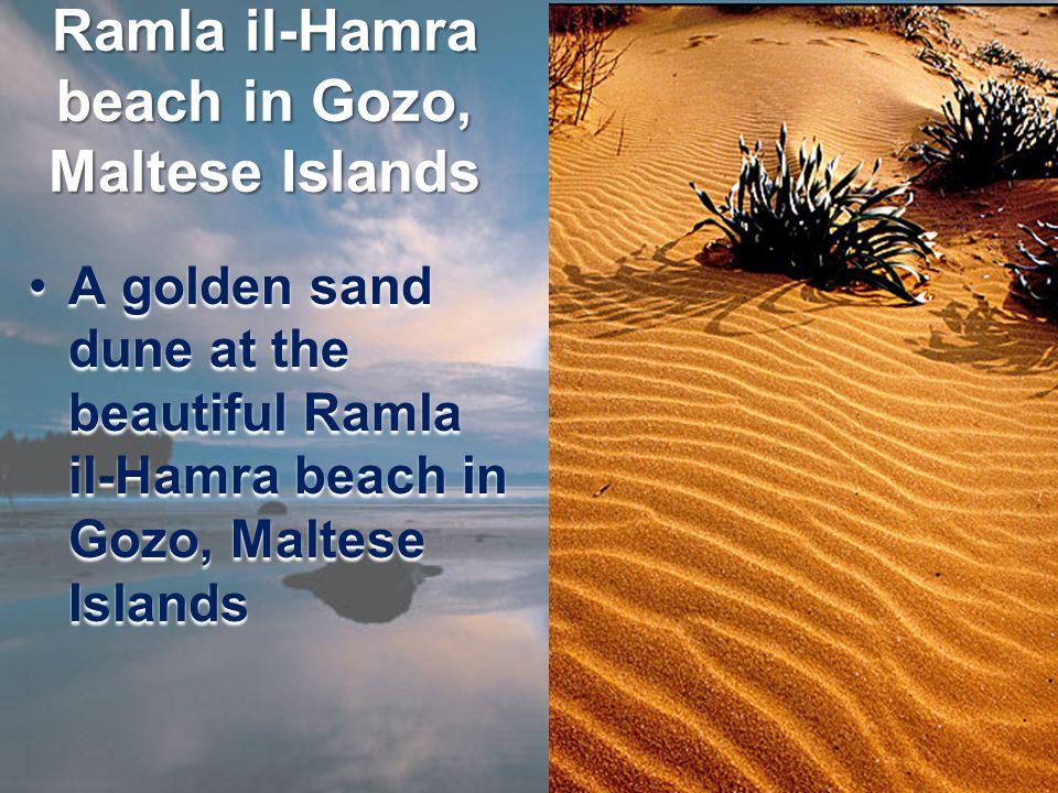 Ramla il-Hamra beach in Gozo, Maltese Islands A golden sand dune at the beautiful Ramla il-Hamra beach in Gozo, Maltese IslandsA golden sand dune at the beautiful Ramla il-Hamra beach in Gozo, Maltese Islands