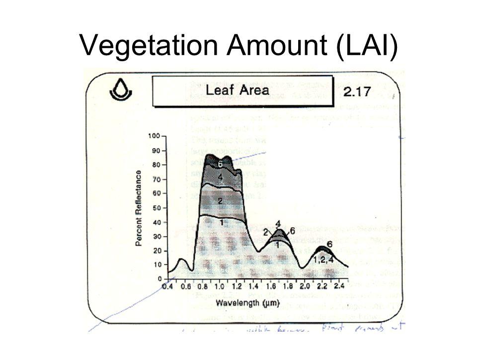 Vegetation Amount (LAI)