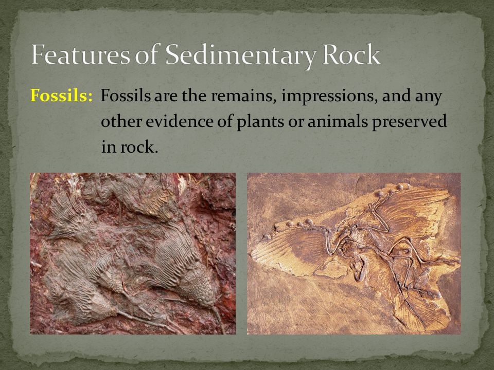 Fossils: Fossils are the remains, impressions, and any other evidence of plants or animals preserved in rock.