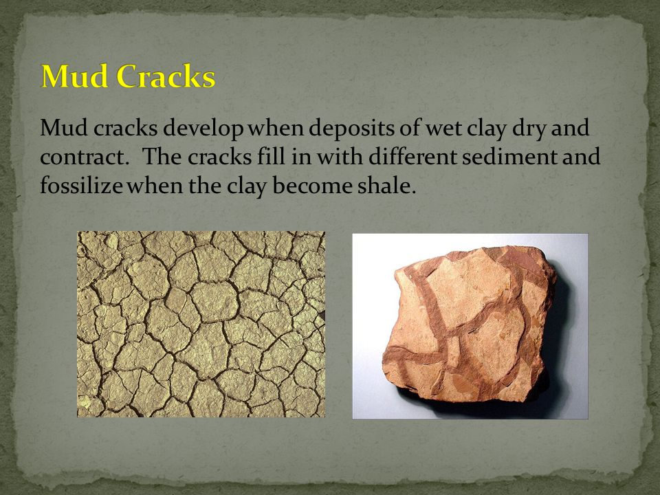 Mud cracks develop when deposits of wet clay dry and contract.