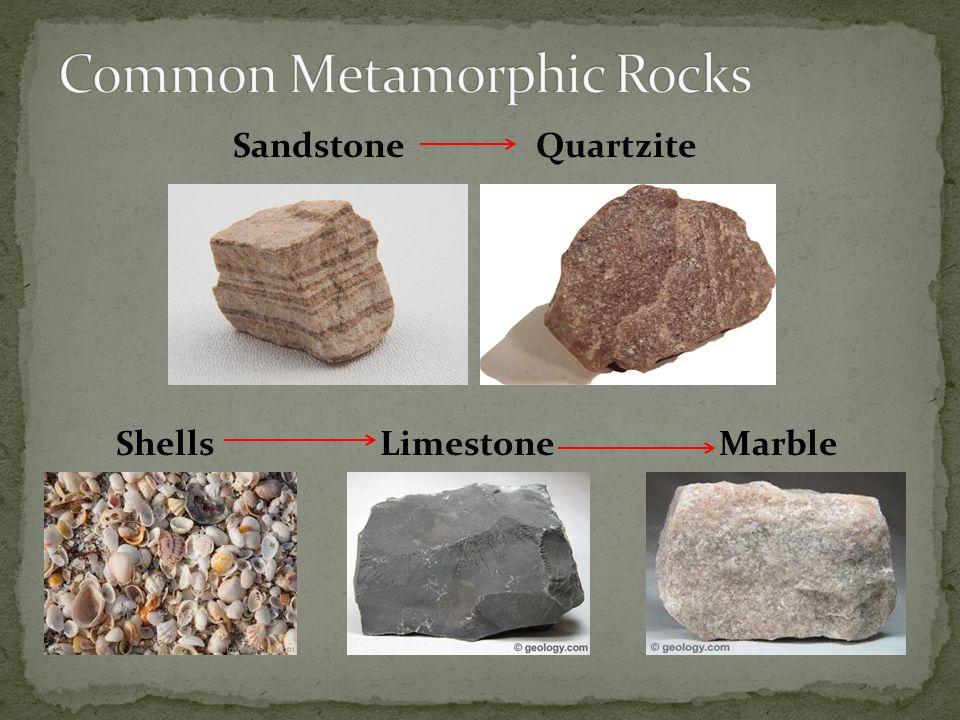 Sandstone Quartzite Shells Limestone Marble