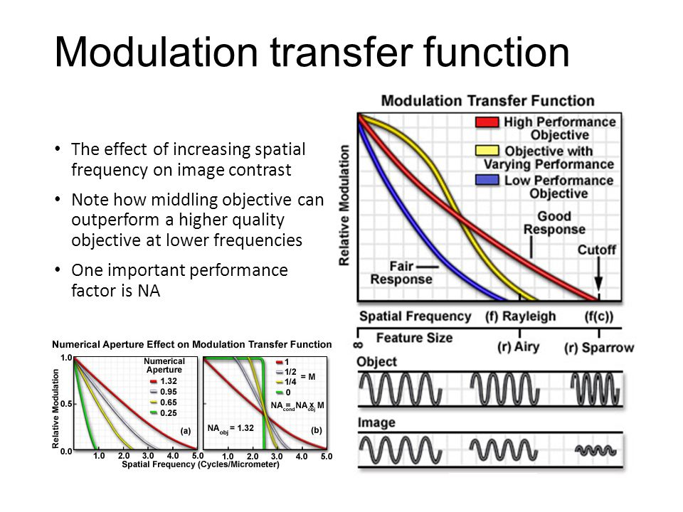 Modulation transfer function The effect of increasing spatial frequency on image contrast Note how middling objective can outperform a higher quality objective at lower frequencies One important performance factor is NA