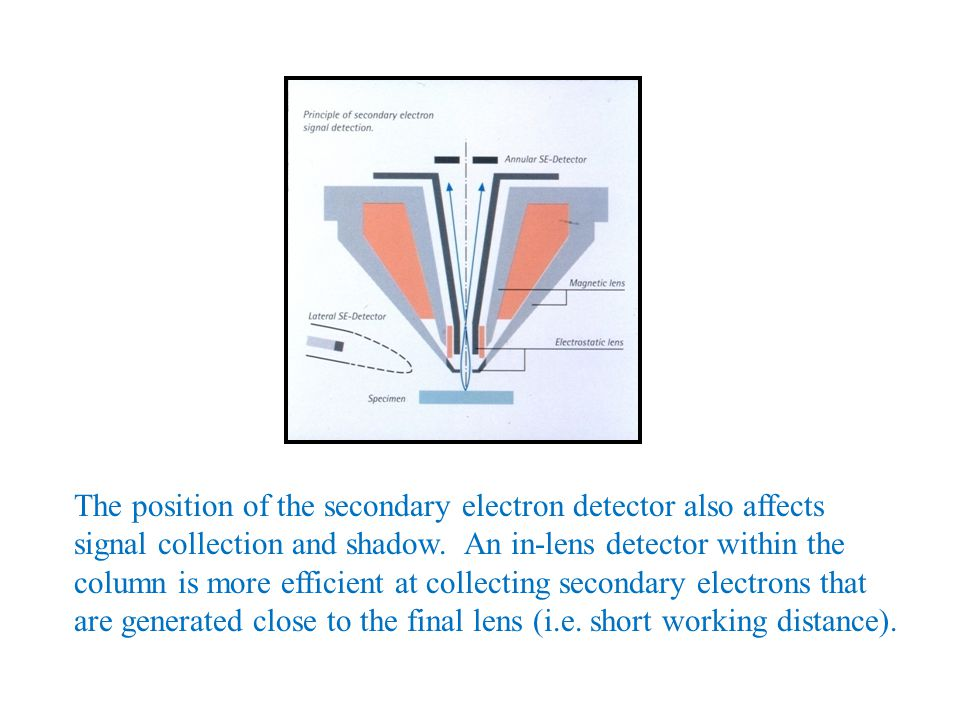 The position of the secondary electron detector also affects signal collection and shadow. An in-lens detector within the column is more efficient at
