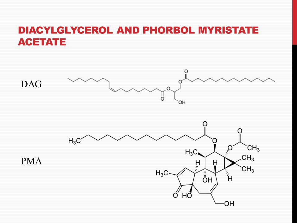 MACROPHAGE PHAGOCYTOSIS: E. COLI LIPOPOLYSACCHARIDE (LPS) Lipid A