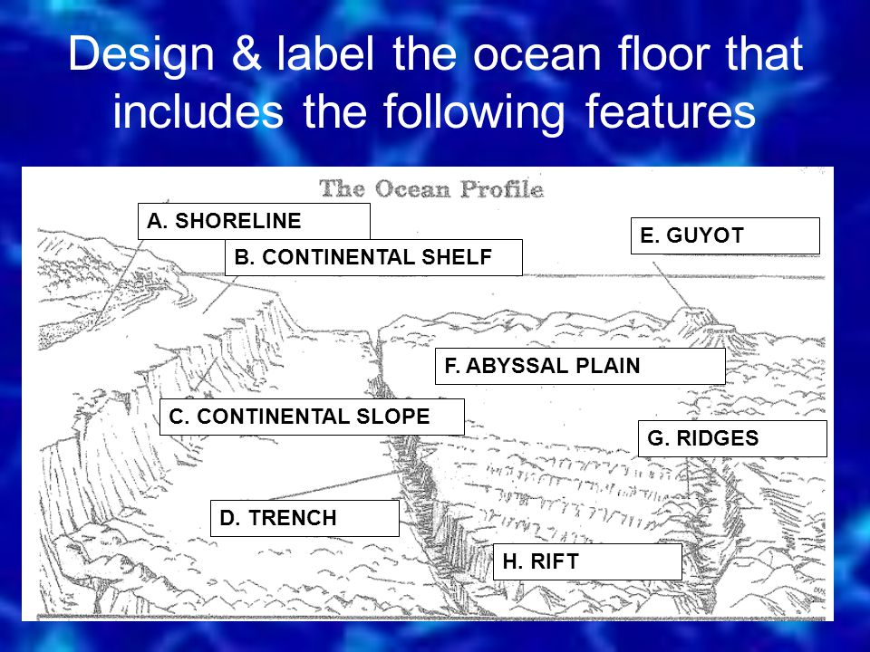 Design & label the ocean floor that includes the following features A.