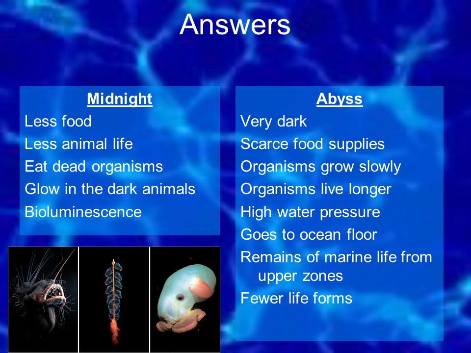 Abyss Very dark Scarce food supplies Organisms grow slowly Organisms live longer High water pressure Goes to ocean floor Remains of marine life from upper zones Fewer life forms Midnight Less food Less animal life Eat dead organisms Glow in the dark animals Bioluminescence Answers