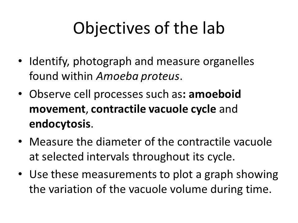 Objectives of the lab Identify, photograph and measure organelles found within Amoeba proteus.