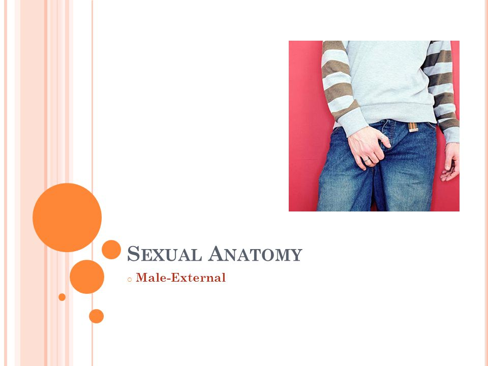 S EXUAL A NATOMY o Male-External