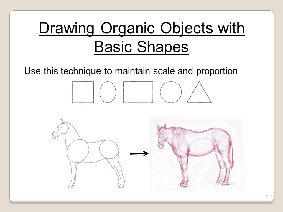 Drawing Organic Objects with Basic Shapes Use this technique to maintain scale and proportion 11