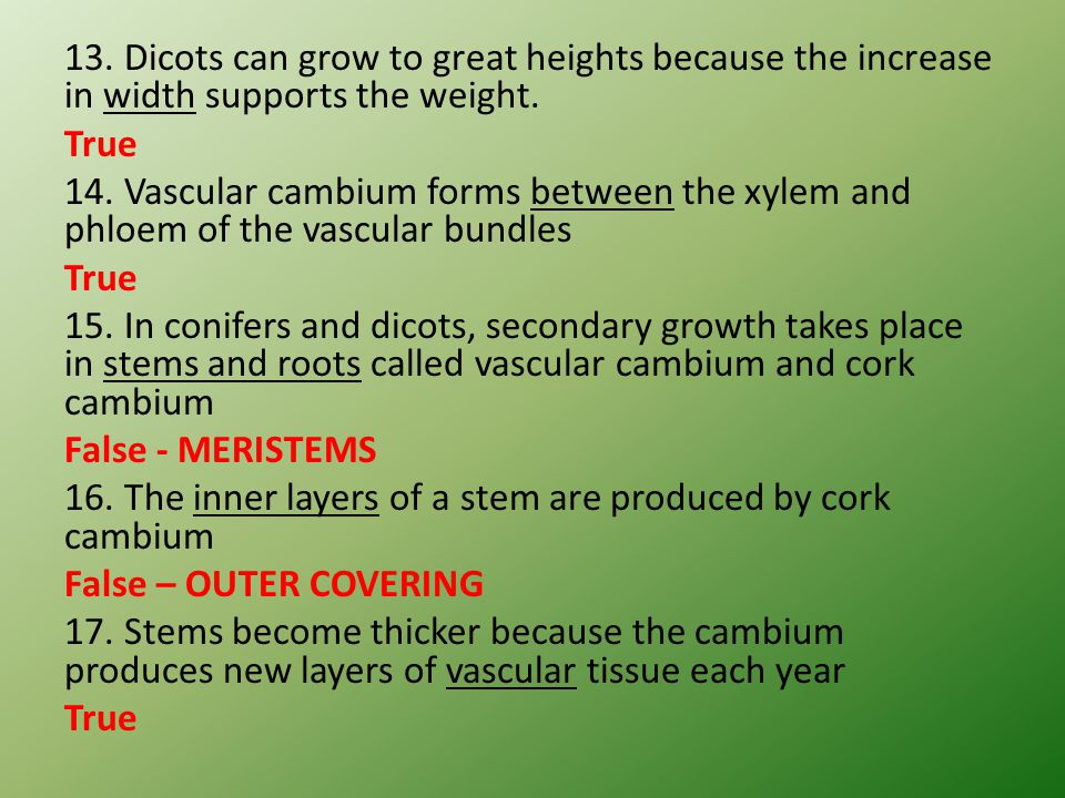 13. Dicots can grow to great heights because the increase in width supports the weight. True 14. Vascular cambium forms between the xylem and phloem o