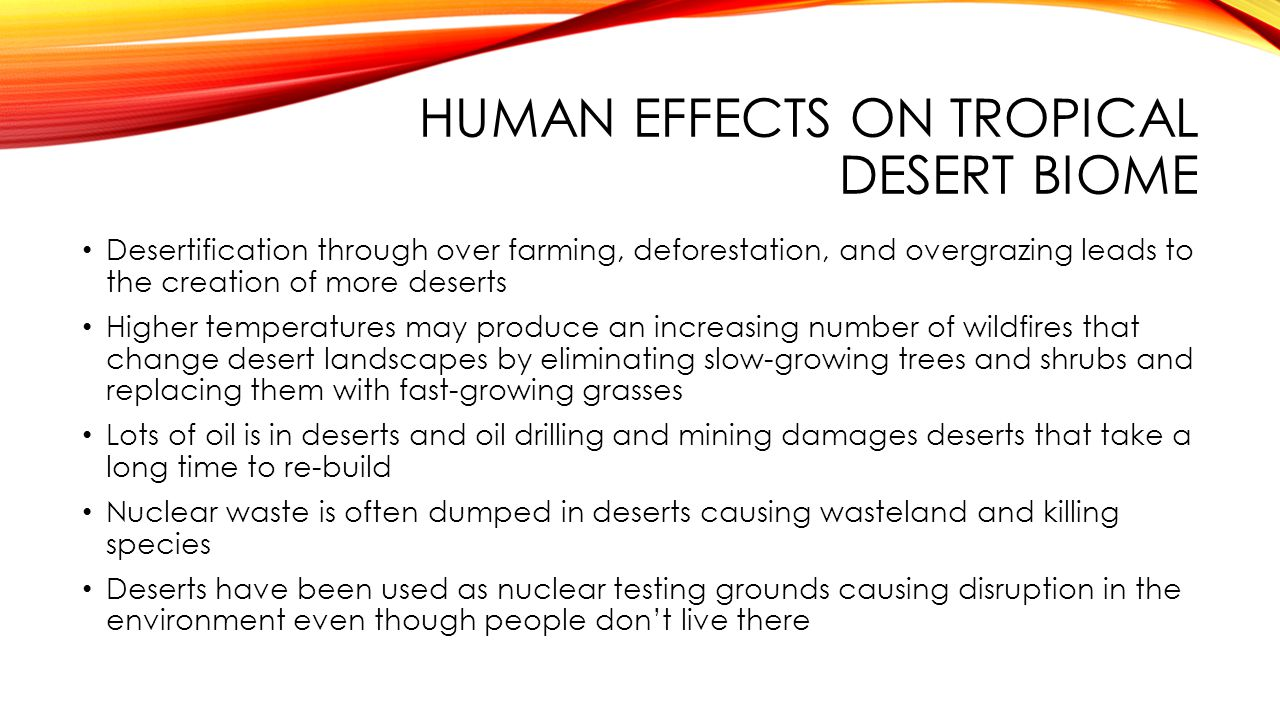 HUMAN EFFECTS ON TROPICAL DESERT BIOME Desertification through over farming, deforestation, and overgrazing leads to the creation of more deserts High