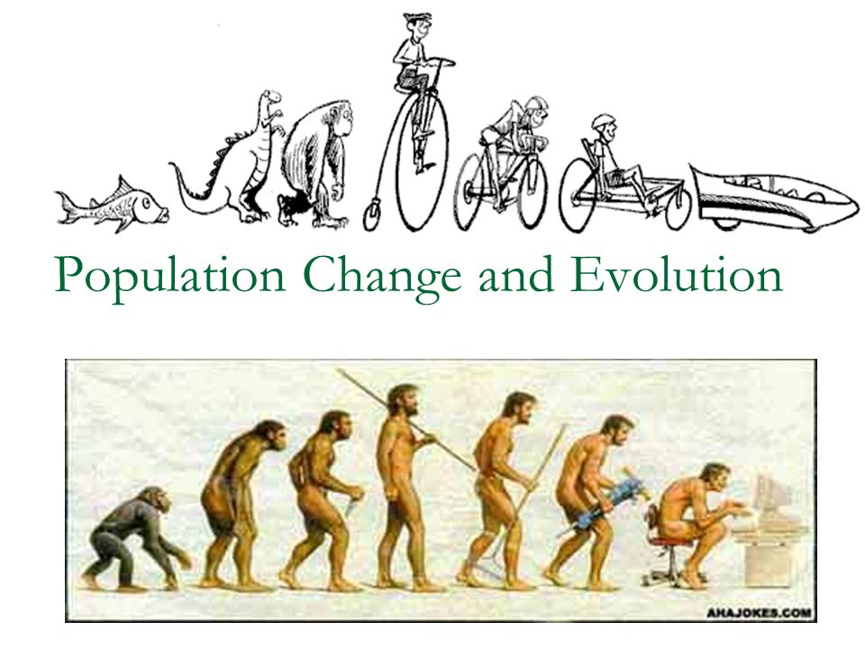Convergence Very different species may also develop similar adaptations due to similar needs in their environment Eg.