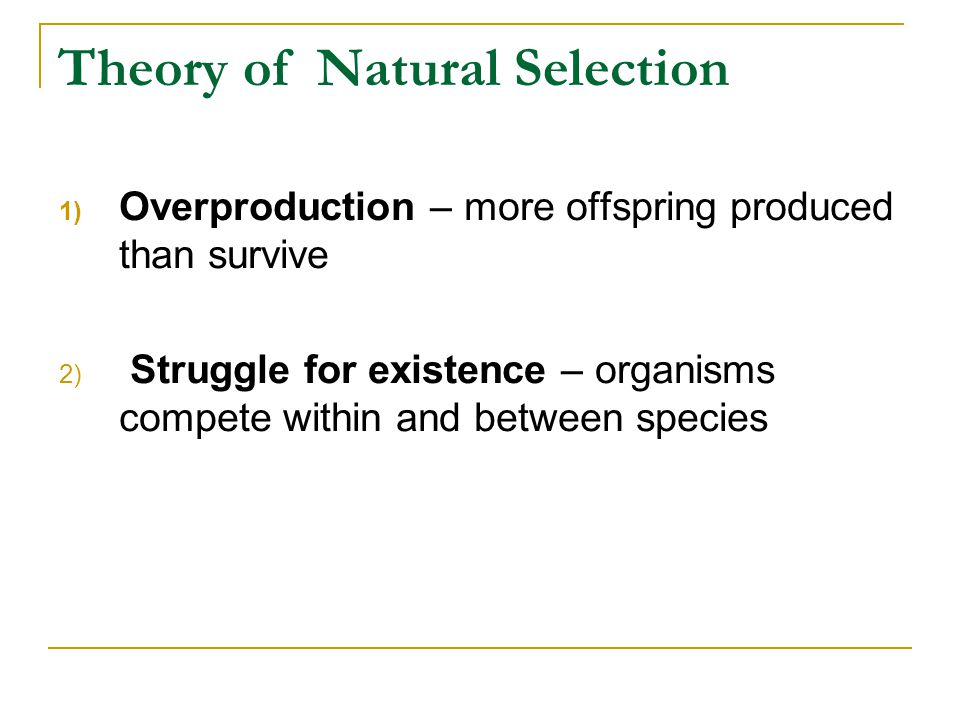 Theory of Natural Selection 1) Overproduction – more offspring produced than survive 2) Struggle for existence – organisms compete within and between