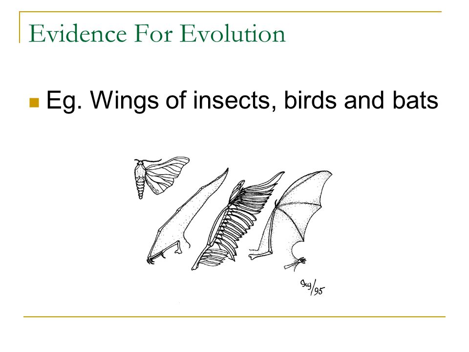 Evidence For Evolution Eg. Wings of insects, birds and bats