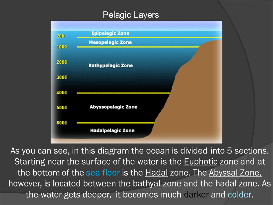 As you can see, in this diagram the ocean is divided into 5 sections. Starting near the surface of the water is the Euphotic zone and at the bottom of