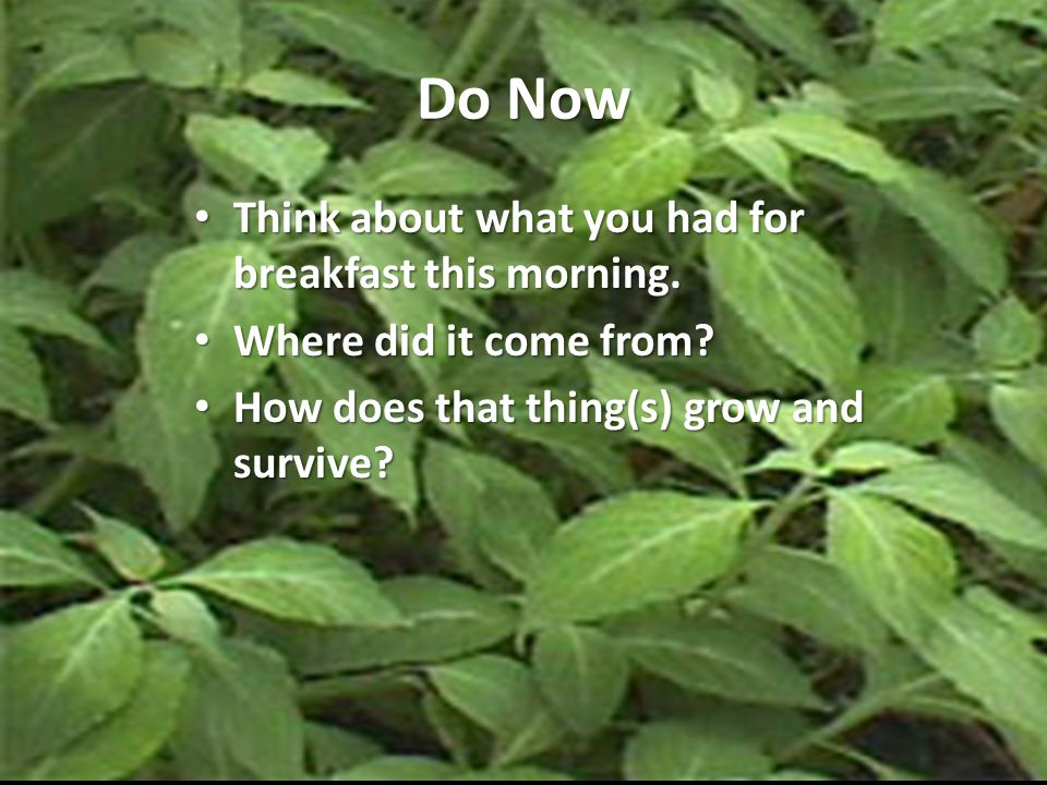 Do Now Think about what you had for breakfast this morning.