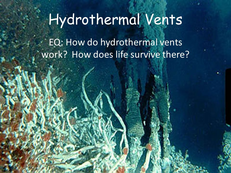 Hydrothermal Vents EQ: How do hydrothermal vents work How does life survive there