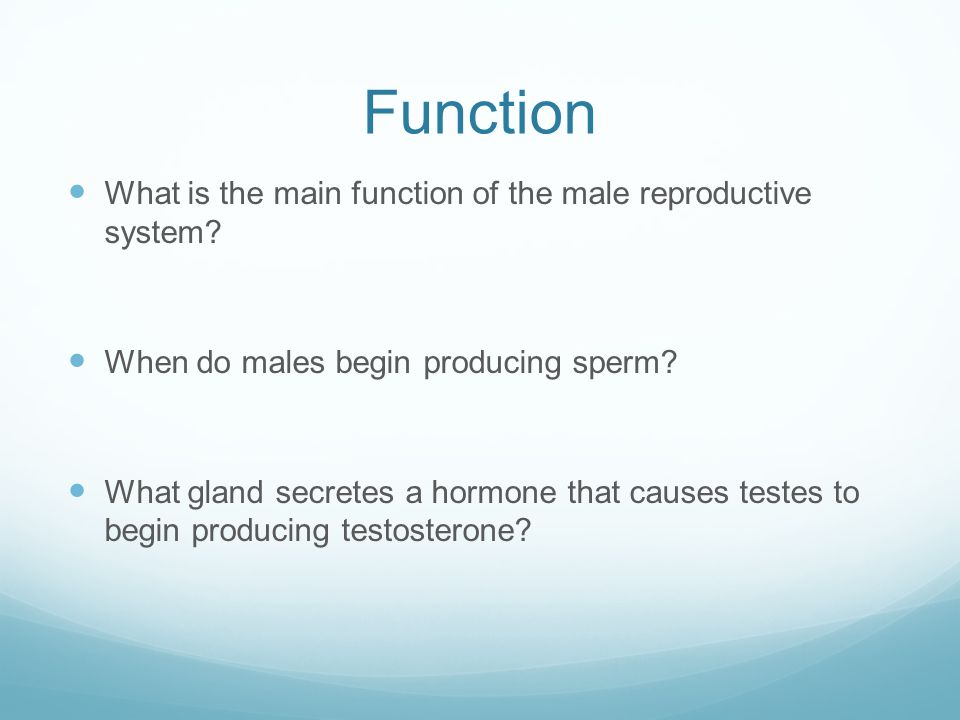 Function Male reproductive system functions to produce sperm-the male reproductive cell A sperm cell unites with a female egg cell (ovum) to form a fertilized ovum.