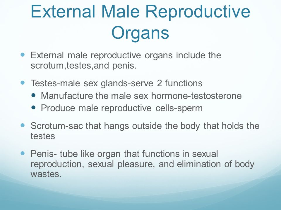 Prostate Gland Lies just below the bladder and surrounds the urethra Made up of both muscular and glandular tissue Secretes a milky,alkaline fluid that mixes w/sperm and makes up major portion of semen.