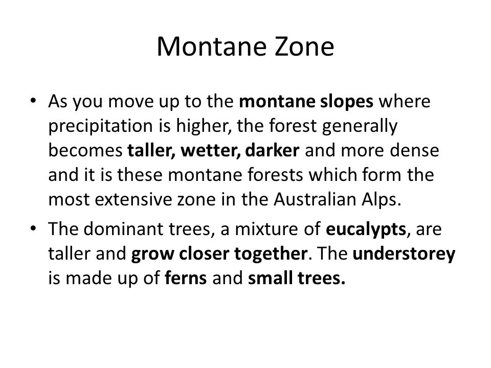 Montane Zone As you move up to the montane slopes where precipitation is higher, the forest generally becomes taller, wetter, darker and more dense and it is these montane forests which form the most extensive zone in the Australian Alps.