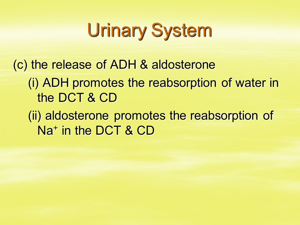 Urinary System (c) the release of ADH & aldosterone (i) ADH promotes the reabsorption of water in the DCT & CD (ii) aldosterone promotes the reabsorption of Na + in the DCT & CD