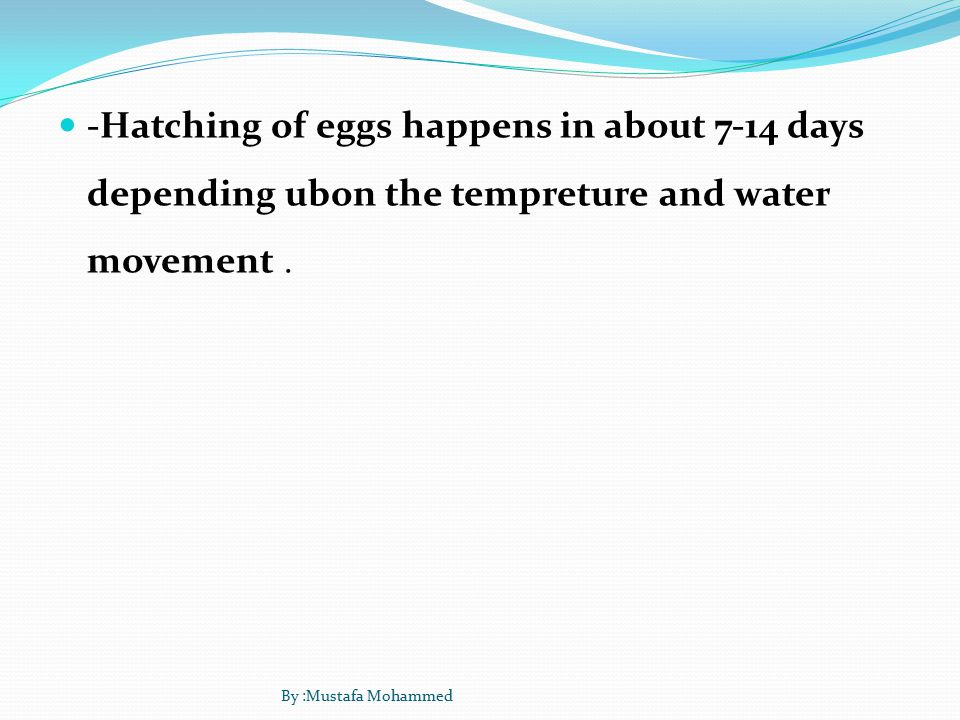 -Hatching of eggs happens in about 7-14 days depending ubon the tempreture and water movement.