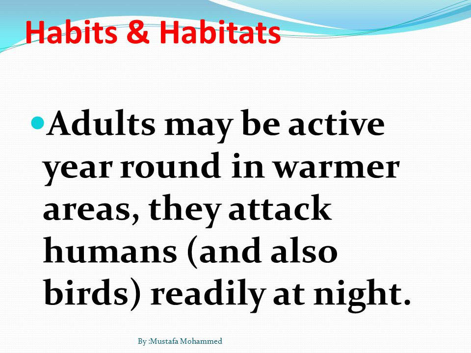 Habits & Habitats Adults may be active year round in warmer areas, they attack humans (and also birds) readily at night.