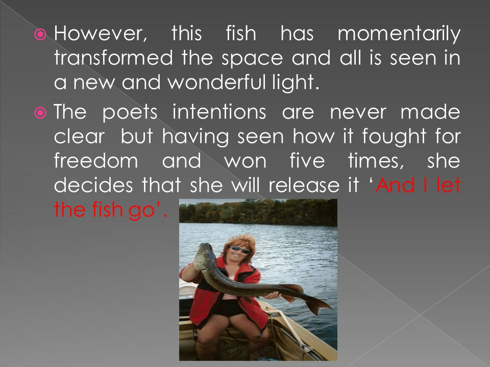  However, this fish has momentarily transformed the space and all is seen in a new and wonderful light.