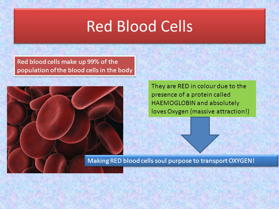 Red Blood Cells Red blood cells make up 99% of the population of the blood cells in the body They are RED in colour due to the presence of a protein c
