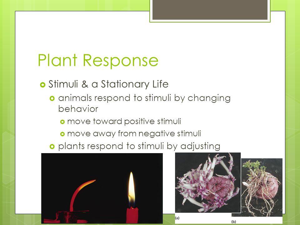 Plant Response  Stimuli & a Stationary Life  animals respond to stimuli by changing behavior  move toward positive stimuli  move away from negativ