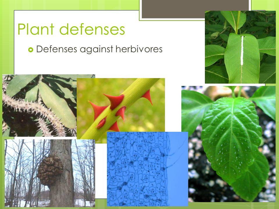 Plant defenses  Defenses against herbivores 2005-2006