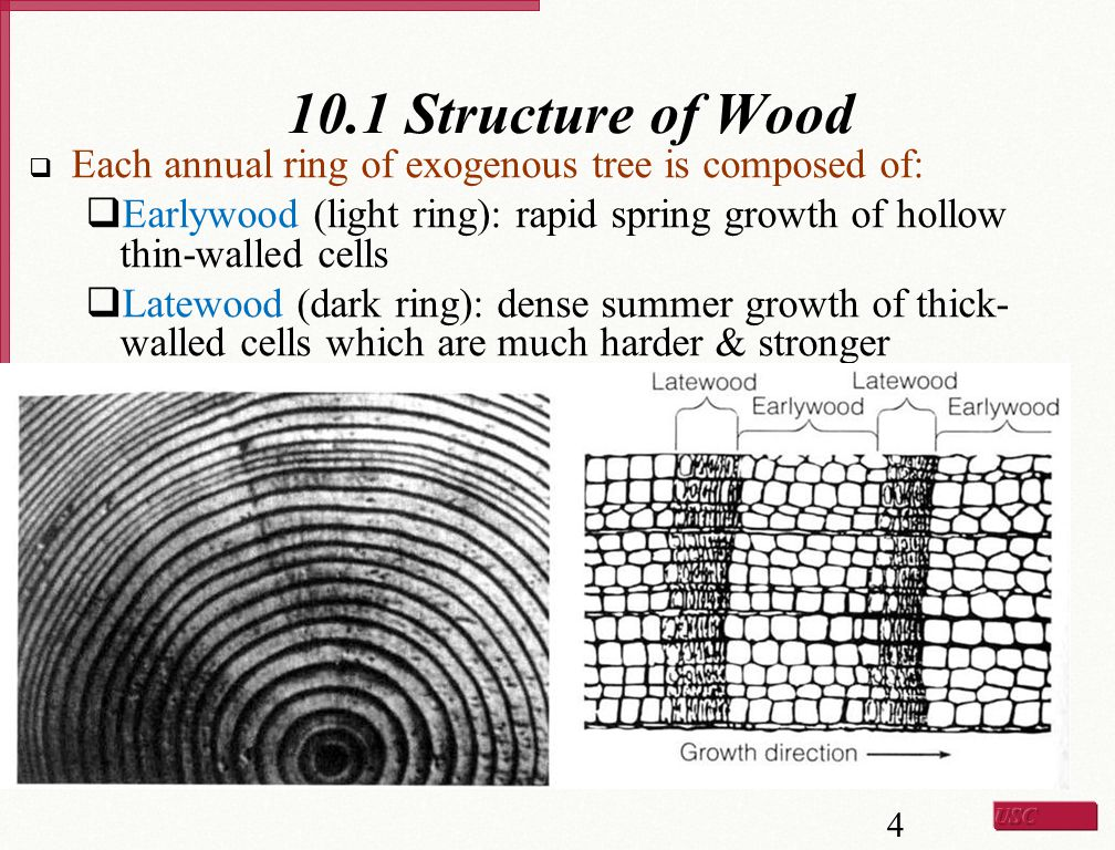 Main Structural Features of Tree Stem  From center axis outwards:  Pith – center stem  Heartwood (darker) – provides structural support  Sapwood (lighter) – transports the sap  Cambium (very thin layer) – location of wood growth  Inner bark  Outer bark 5