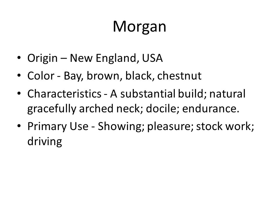 Morgan Origin – New England, USA Color - Bay, brown, black, chestnut Characteristics - A substantial build; natural gracefully arched neck; docile; endurance.