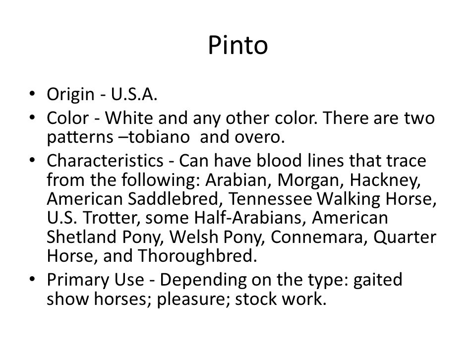 Pinto Origin - U.S.A. Color - White and any other color.