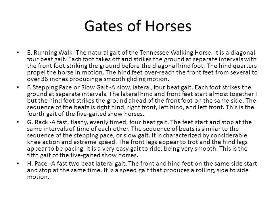 Gates of Horses E. Running Walk -The natural gait of the Tennessee Walking Horse.