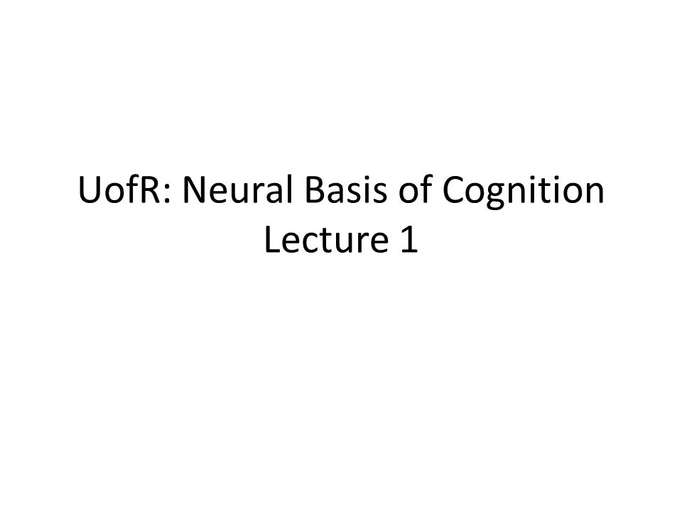 Neuroanatomy and Brain Function What is the link.