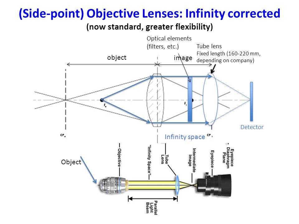 (Side-point) Objective Lenses: Infinity corrected (now standard, greater flexibility) Optical elements (filters, etc.) Detector Tube lens Fixed length (160-220 mm, depending on company) Infinity space object image Object