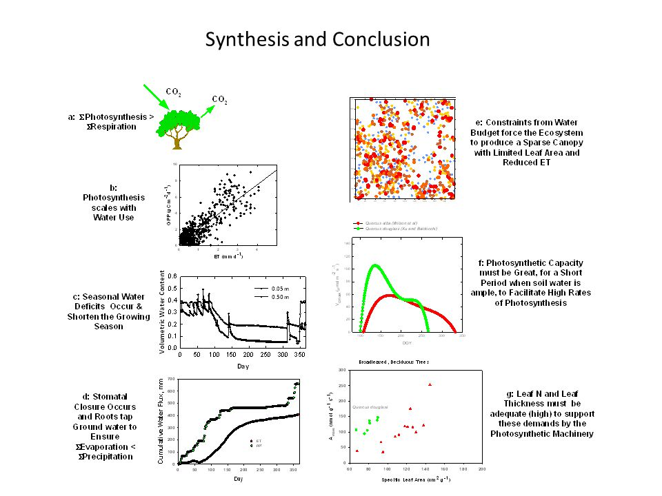 Synthesis and Conclusion