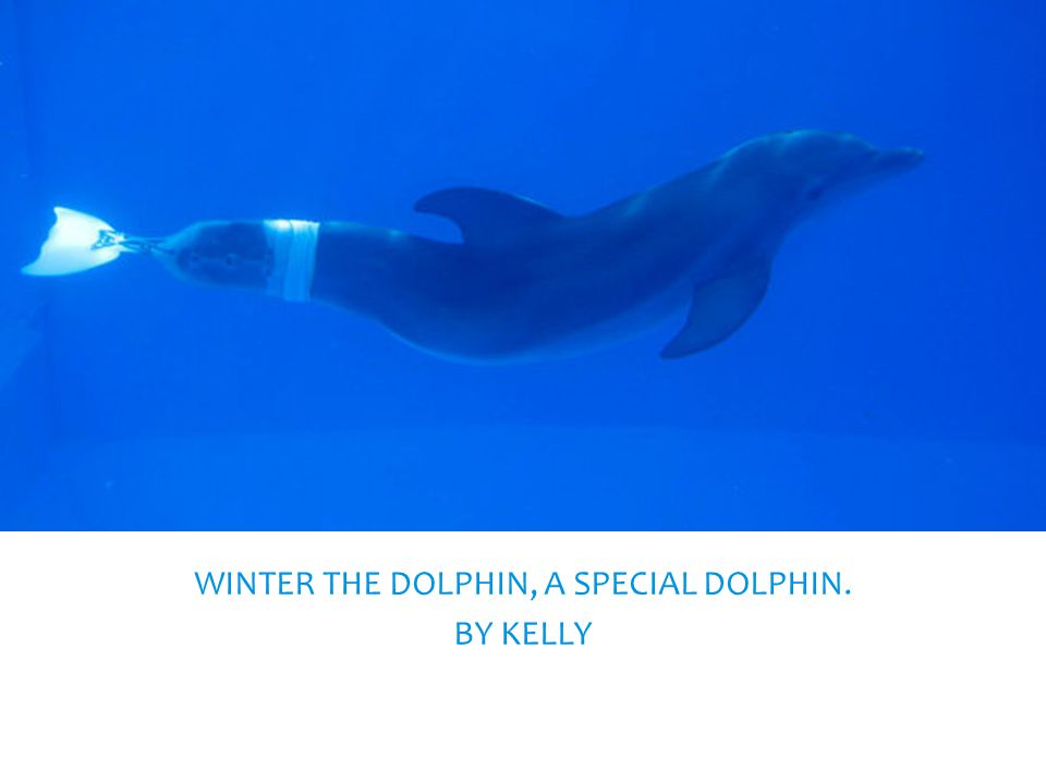 WINTER THE DOLPHIN, A SPECIAL DOLPHIN. BY KELLY