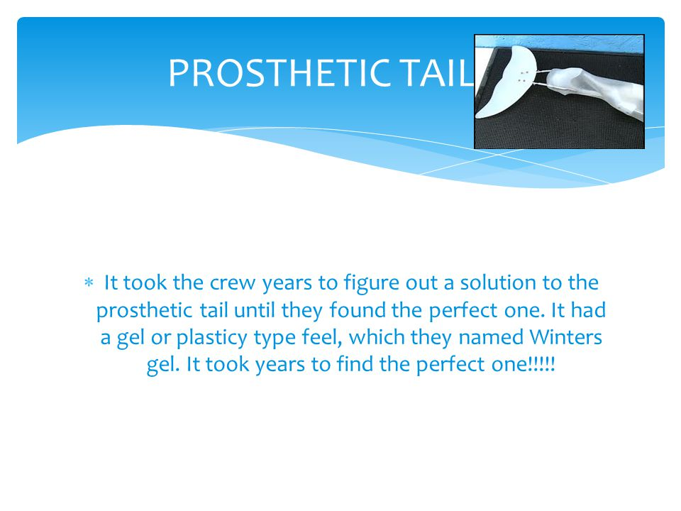  It took the crew years to figure out a solution to the prosthetic tail until they found the perfect one. It had a gel or plasticy type feel, which t