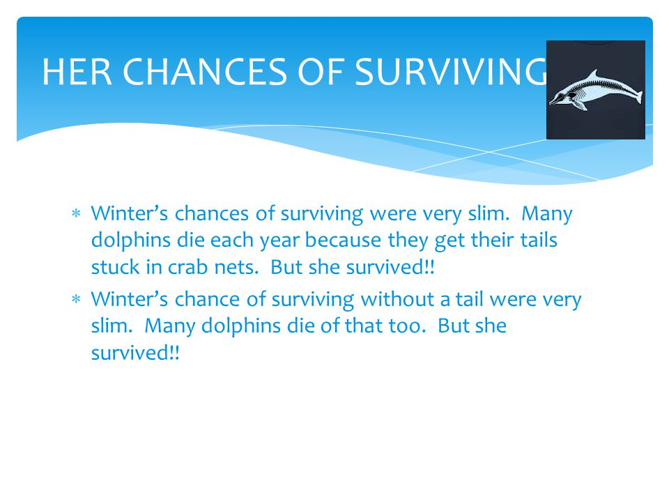  Winter's chances of surviving were very slim. Many dolphins die each year because they get their tails stuck in crab nets. But she survived!!  Wint