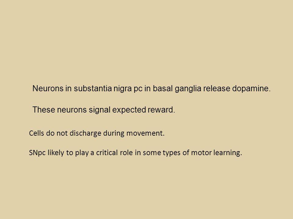 Neurons in substantia nigra pc in basal ganglia release dopamine.