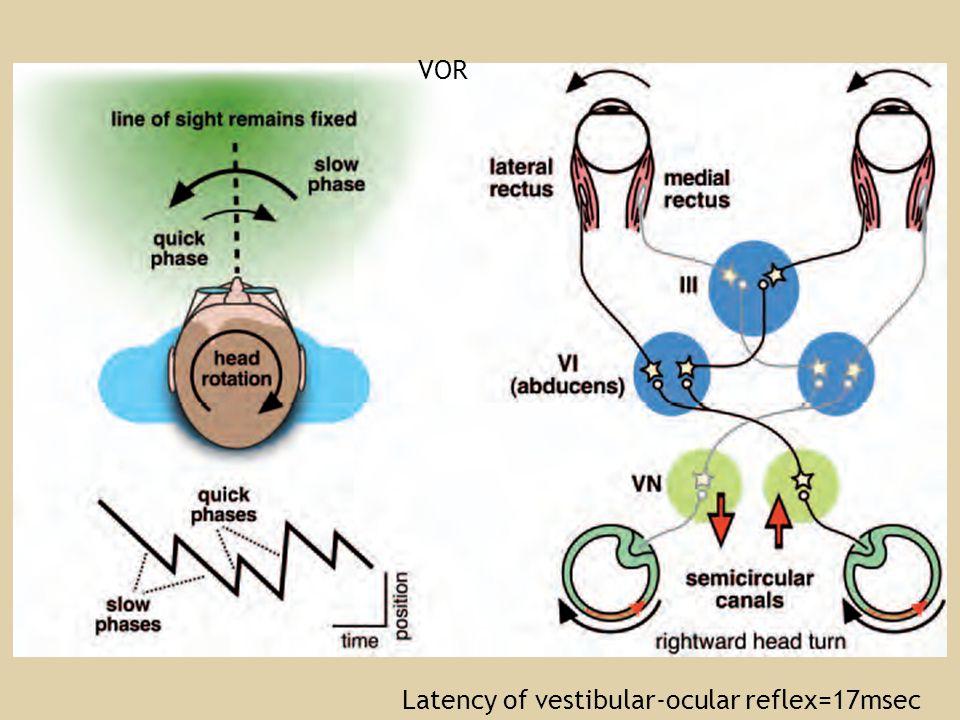 Latency of vestibular-ocular reflex=17msec VOR
